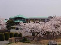 マウントあかね 桜