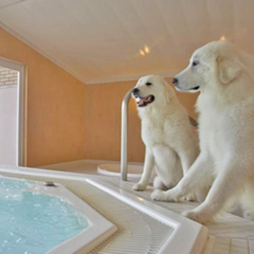 【ジャグジー風呂】ワンちゃんとジャグジーで贅沢バスタイム♪
