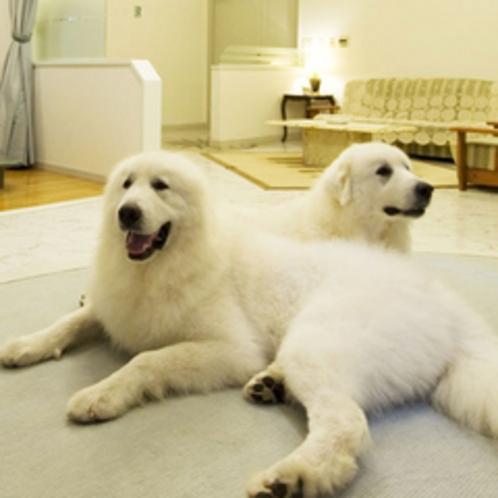 【1F洋室】愛犬と特別なご滞在をお過ごしくださいませ。