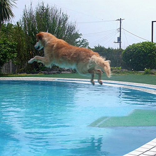 【プール】姉妹館・プチホテルサンロードのペットと泳げるプールです♪