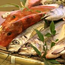 ホテル直営せんしゅう地魚や 鮮魚