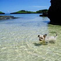 *ペットと一緒にお泊まりOK!愛犬と初めての海遊びしませんか♪