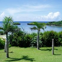 *ヤシの木の向こうに広がるのは、熱帯魚もたくさん生息する青い海!