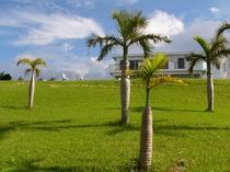 椰子のお庭