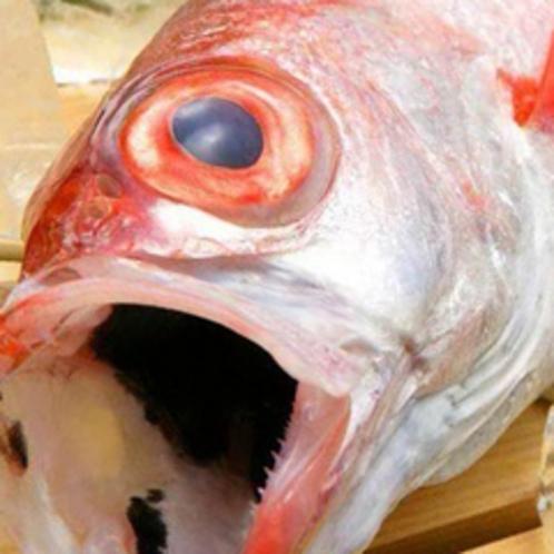 日本海の高級魚『のどぐろ』