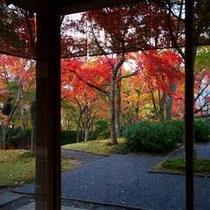 箱根美術館紅葉