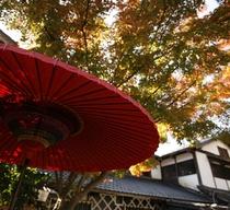 秋:玄関紅葉