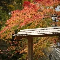 露天風呂に彩る紅葉