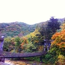 紅葉を愛でるかずら橋