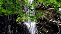 【庭園】 ※花鳥風月~耳を澄ませば鳥の声、水のせせらぎに心和む。