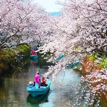 【春】お隣の勝浦町で開催される「生名さくらまつり」