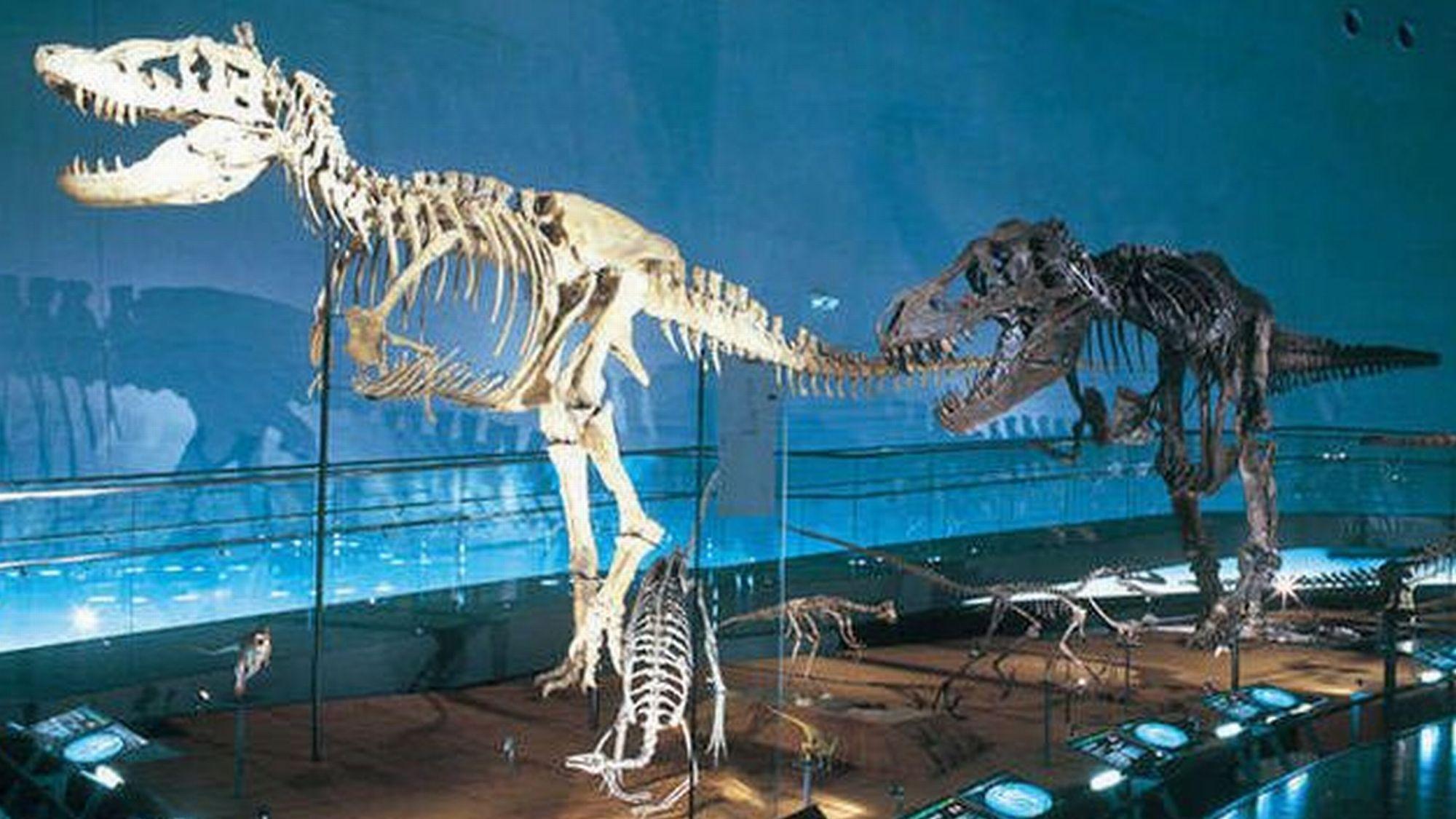 【恐竜博物館】恐竜王国ふくいを象徴する「福井県恐竜博物館」