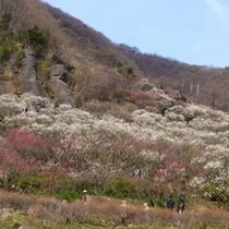 2〜3月 『梅の宴』イメージ