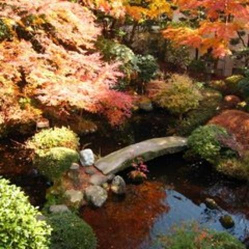 【庭園】秋の紅葉