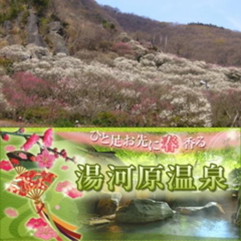 2〜3月 『梅の宴』