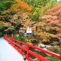 【秋/紅葉】仙境野天風呂へ渡る赤い橋