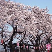 ■桂城の桜