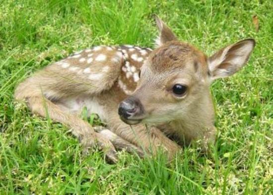 【お子様「鹿」デビュー!!】マイカーでGO♪《駐車無料》《幼児無料》鹿せんべい付♪/2食付