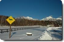 雪の谷口牧場