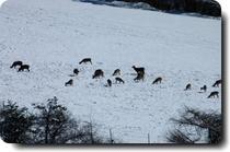 鹿の群れに占領・・・