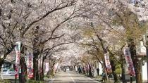 桜まつり!!