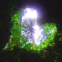 *【ウィルソン株】まるでハート型の洞窟のような不思議な空間の中には神様を祭る小さな祠があります。
