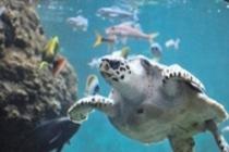 葛西臨海水族園 ウミガメ
