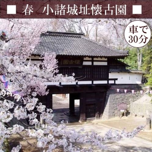 【小諸城址懐古園】日本さくら名所100選に選出!大変貴重な「小諸八重紅枝垂」も見られます♪車30分