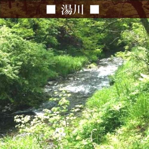 【湯川】どーみーのすぐ近くを流れている湯川。ハルニレテラス付近の新緑はとてもきれいです♪