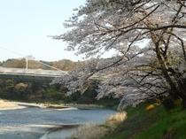 釜の淵公園の桜(イメージ)