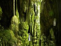 「井倉洞」内にある落差50mの滝は圧巻!(車で40分)