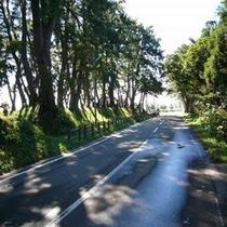 松前街道の松並木