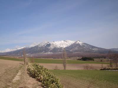 【春】春の十勝岳連峰・2本のポプラ