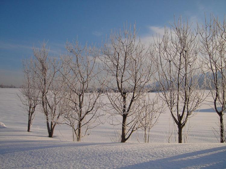 【冬】氷の世界