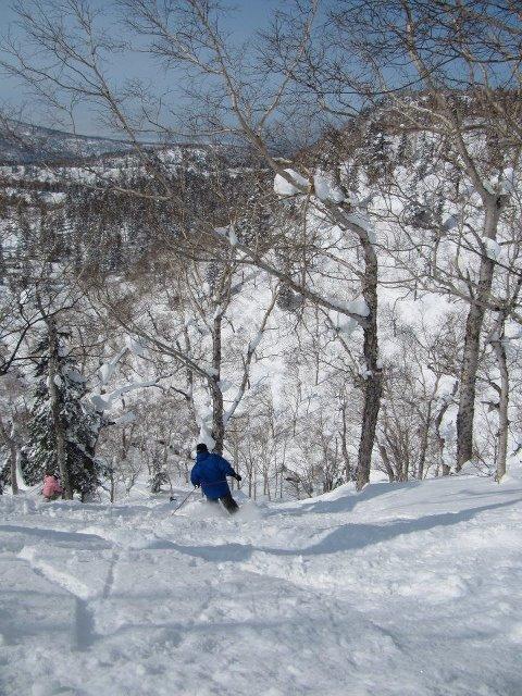 【バックカントリースキー】真っ白な木々の間を滑走!