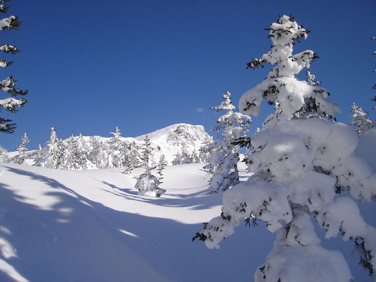 【スノーシューツアー】十勝岳温泉裏の森(十勝岳コース)