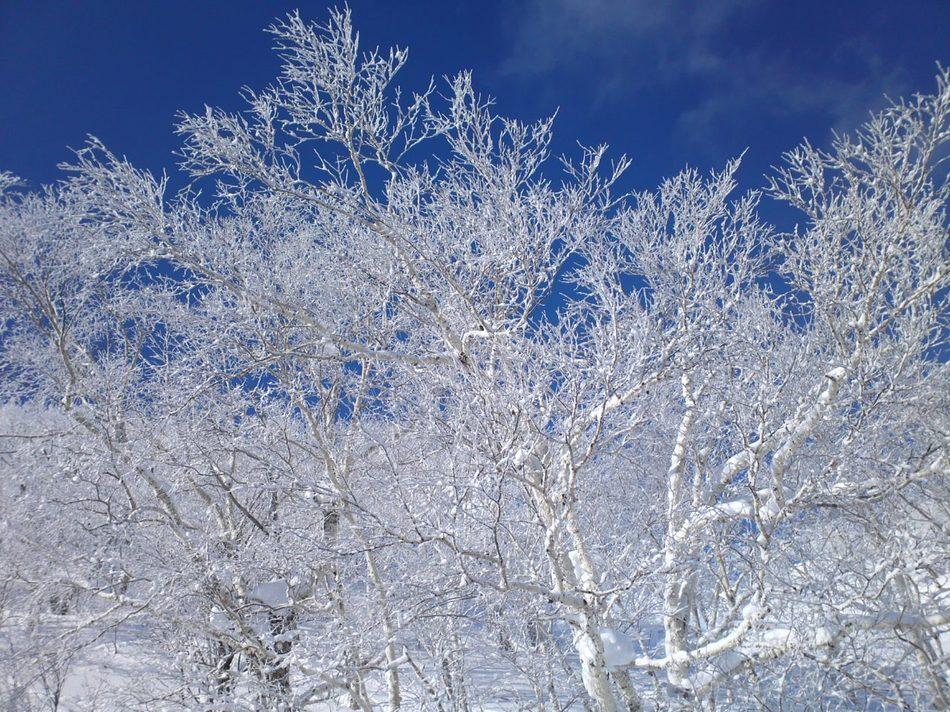 【富良野スキー場】ゲレンデの美しい樹氷