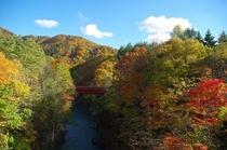 【秋】金山の橋にかかる紅葉