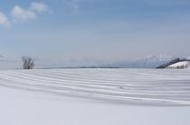 【春】美しい雪上の縞模様