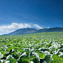 浅間山とキャベツ畑