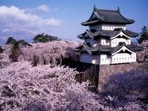 日本三大さくらの名所『弘前城』は必見!!