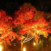虹の郷ライトアップ1