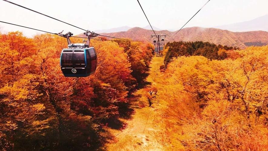 【箱根の紅葉】ロープウェイからの景色