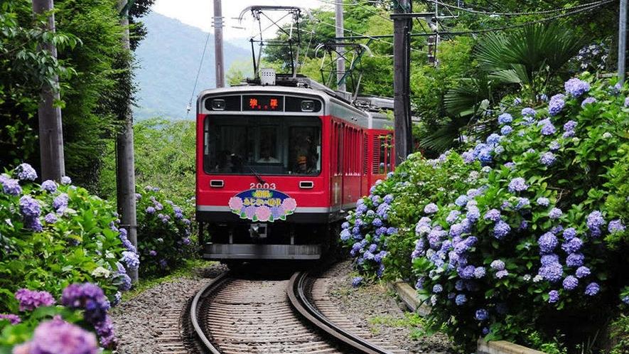【アジサイ列車】梅雨時期だけのお楽しみ