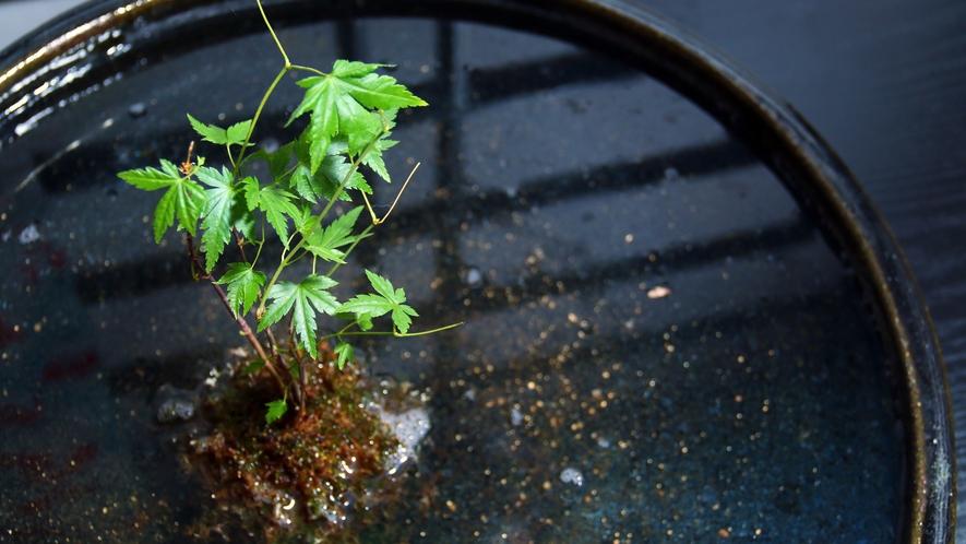 【レトロな置物シリーズ】ロビーを飾るちょっとした癒しのグリーン『苔玉紅葉』