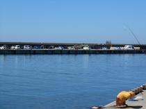 柏崎港・管理釣り場
