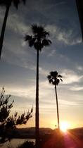 フェニックスと沈む夕日