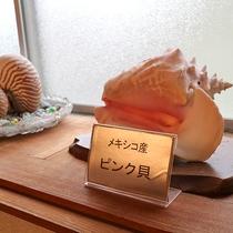 *[館内一例]メキシコ産やパラオの巻貝など、珍しい貝もありますよ。