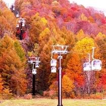【秋】真っ赤な紅葉とゴンドラ