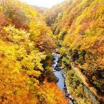 【秋】中津川渓谷